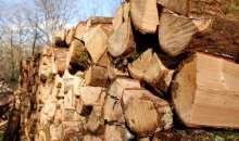 3 бона глоба, ако се топлиш с незаконни дърва